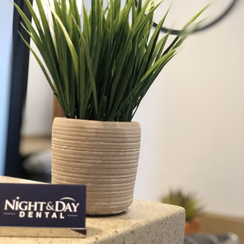 A plant inside Night & Day Dental office in Holly Springs